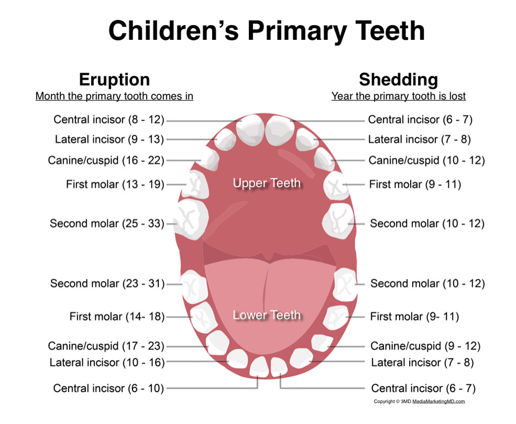 Anyone who has more than 20 deciduous, or primary, teeth or 32 permanent teeth is considered to have hyperdontia.