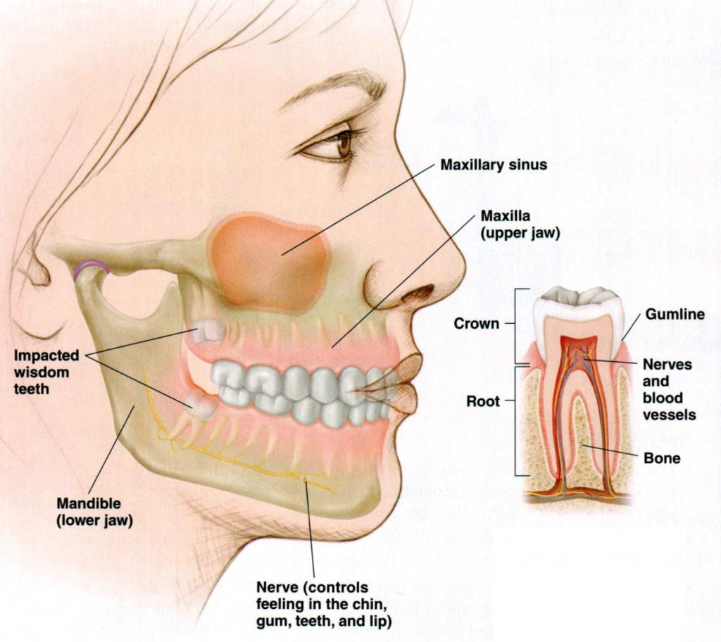 Wisdom Teeth Kids Dental Dr. Holt, Plano and carrollton
